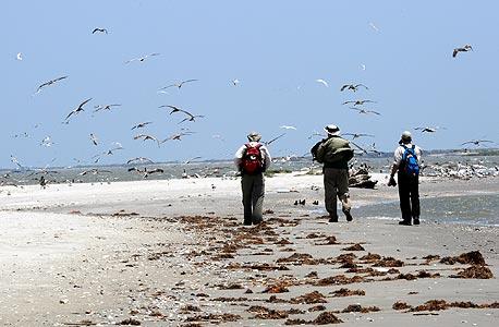 צילום: cc by Deepwater Horizon Response