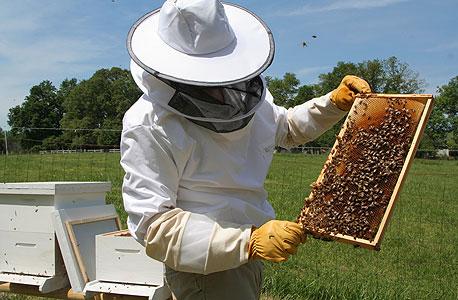 Beekeeping. Photo: Shutterstock